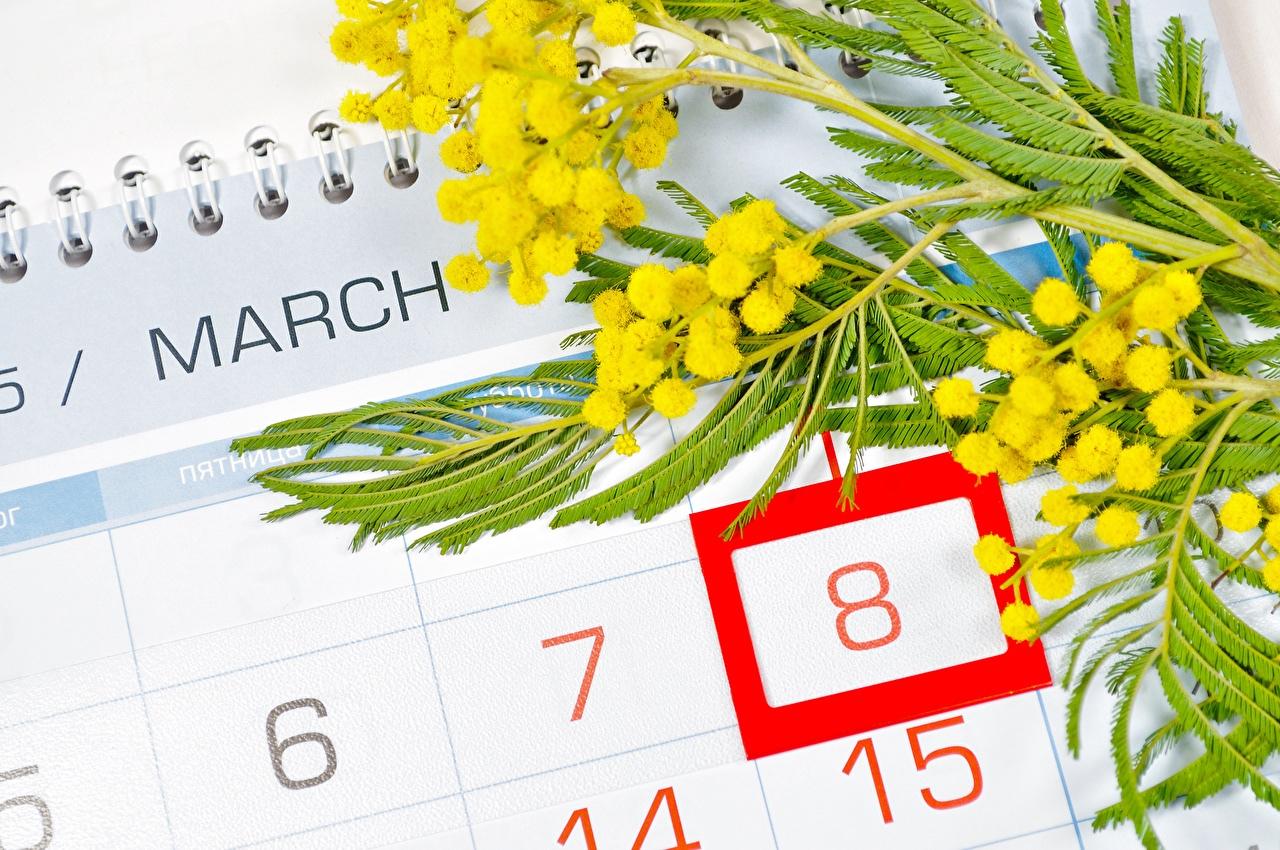 Mimosa festa delle donne 8 marzo